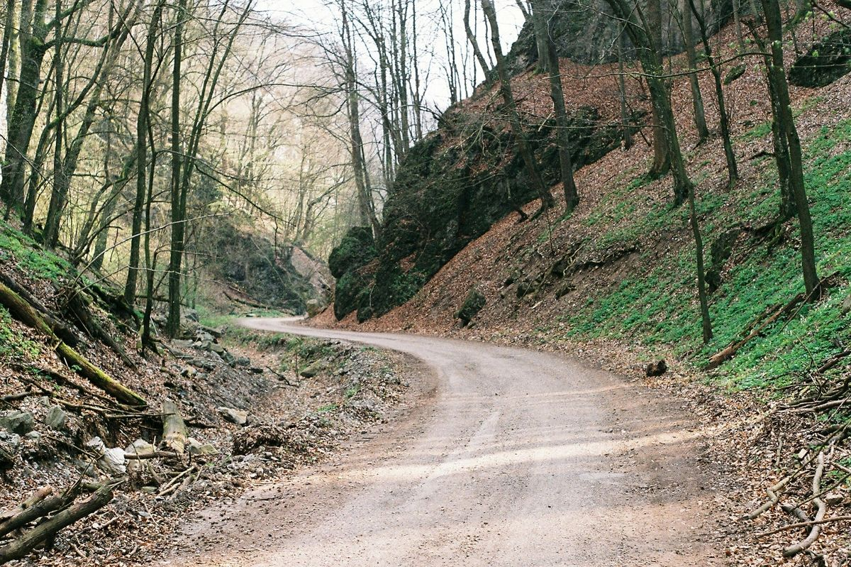 Snapshot of a dirt road.